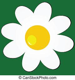 雛菊, 上, 綠色的背景