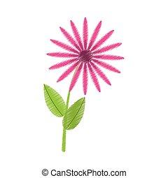 雛菊, 花, 植物群, 圖畫, 束