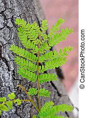 雜草水生植物, 生長, 上, 大, 樹。