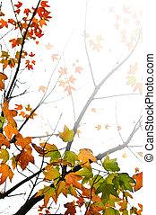 離開, 楓樹, 背景, 秋天