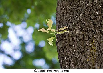 離開, 橡木, 自然