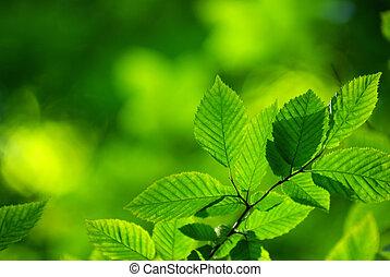 離開, 綠色