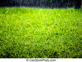 雨が降る, 上に, 緑の芝生