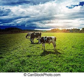 雨, 去, 到, 牧場