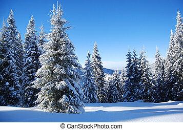 雪が多い山, 森林