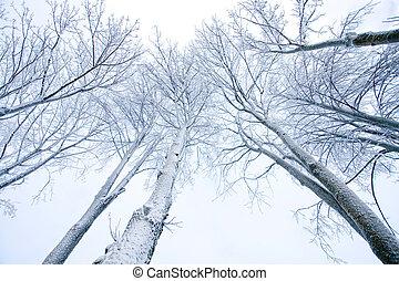 雪で覆われている, 木