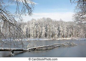 雪で覆われている, 森林