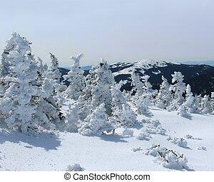 雪白的山, 頂部