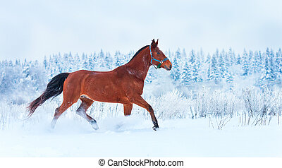 雪, 動くこと, 馬, 湾