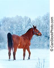 雪, 地位, 馬, 湾