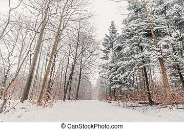雪, 木, 森林