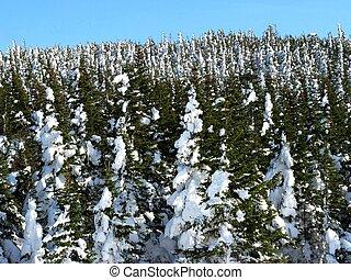 雪 蓋了 樹