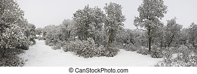 雪, forest., パノラマである, カバーされた, スペイン, 光景