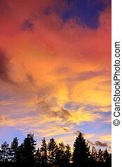 雲, の上, 湖, 木, 日没, tahoe, カリフォルニア, 赤