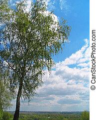 雲, シラカバ