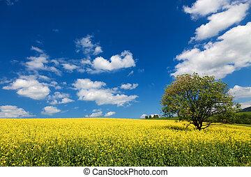 雲, -, 植物, 菜種, 緑のフィールド, エネルギー, 美しい