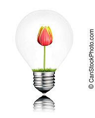 電球, ∥で∥, 赤いチューリップ, 花, 成長する, 中, 隔離された