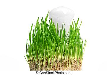 電球, 上に, 草, symbolizing, 緑, エネルギー