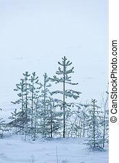 霜, 日, 湖, 冬, 松の木, 海岸