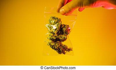 霞, strains, 紫色, kush, og, buds., indica, sativa, 最も良く, マリファナ