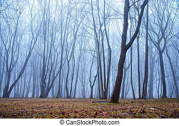 霧が深い, 中に, ∥, 森林