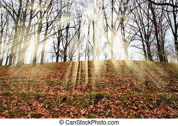 霧が深い, 光線, 絵のよう, 太陽, 朝, forest., 秋