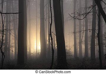 霧が深い, 朝, 森林地帯