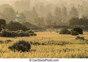 霧が深い, 牧草地, 金, 朝