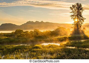 霧が深い, 黄色, 風景, 山