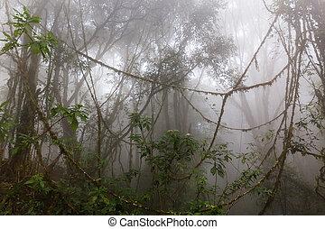 霧が濃い, ジャングル