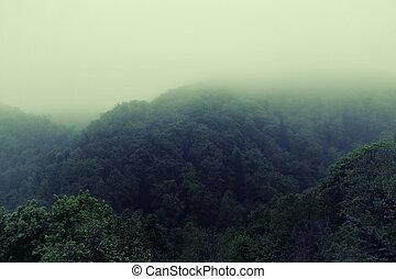 霧が濃い, 朝, 雨, 森林