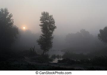霧が濃い, 朝, 1
