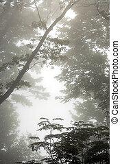 霧が濃い, 木
