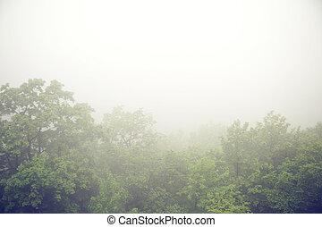 霧が濃い, 森林, の上, 朝