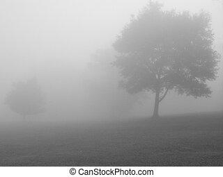 霧が濃い, bw, 日