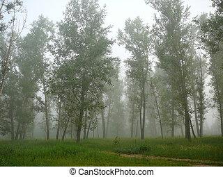 霧, 在, 森林
