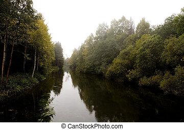 霧, 森林, 秋