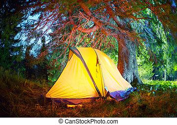 露營, 鮮艷, 夜晚