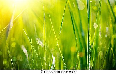 露, 新たに, closeup., 草, 低下, 緑, 柔らかい 焦点