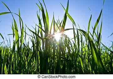 青いライト, 空, 背中, 緑, 太陽, 草