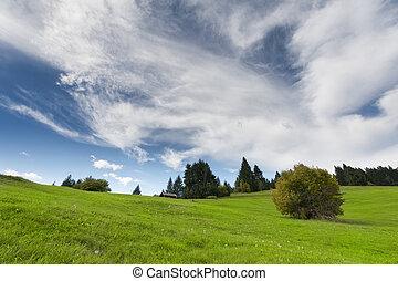青い山地, 牧草地, 空, 単一, 曇り, ブッシュ, 緑, 新たに, 草