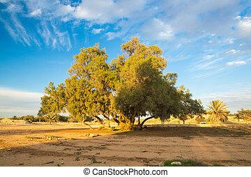 青い空, に対して, 木