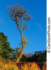 青い空, ゆとり, 木