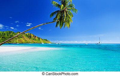 青い空, 上に, 木, やし, 礁湖, 掛かること