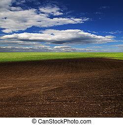 青い空, 明るい, 緑, 新たに, 草