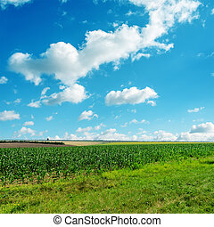 青い空, 曇り, 緑, 下に, 草