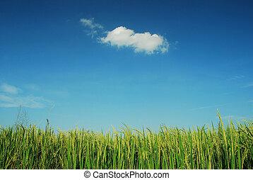 青い空, 曇り, 緑, 雲, 背景, 草, 風景