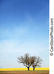 青い空, 木, フィールド
