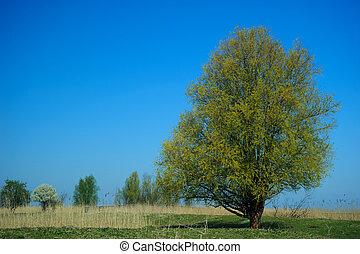 青い空, 木