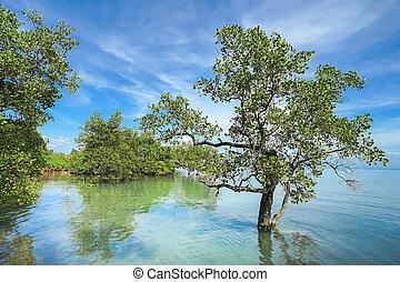 青い空, 木, 曇り, バックグラウンド。, 海